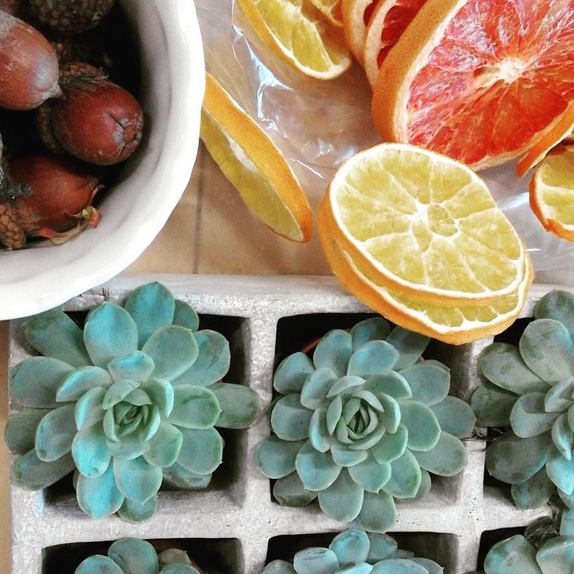 Pomarańcze, żołędzie i sukulenty posłużą za dekoracje /123RF/PICSEL