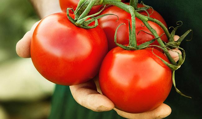 pomidory promieniowanie uv /© Photogenica