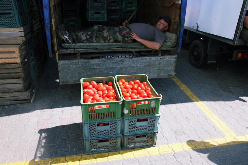 Pomidory w Broniszach mają dobrą cenę. Zdj. ilustracyjne /Stach Antkowiak /Reporter