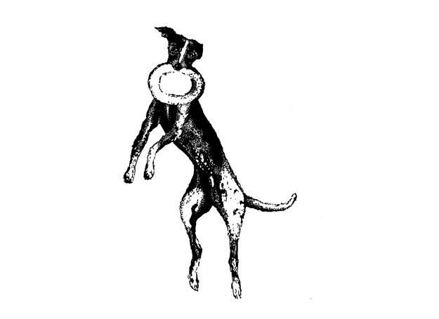 Pomiędzy ludzkim a psim frisbee występują istotne różnice! /Dogandsport