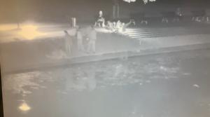 Pomorskie: Rzucili się na ratunek kotu, który wpadł do rzeki