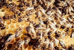 Pomorskie: Ule zalane ropą, setki padłych pszczół
