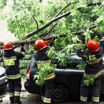 Pomorskie: Wiatr powalił drzewa, zerwał linie energetyczne
