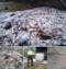 Pomorze: Wyrzucił odpady z ryb do lasu, bo myślał, że zjedzą je zwierzęta
