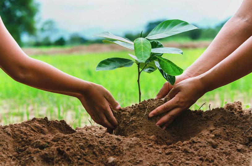 Poprzez program Zielona Inicjatywa Arabii Saudyjskiej w kraju ma zostać posadzonych 10 miliardów drzew /123RF/PICSEL