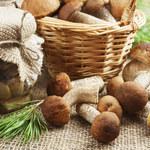 Pora na grzyby - zbierz i przechowaj na zimę