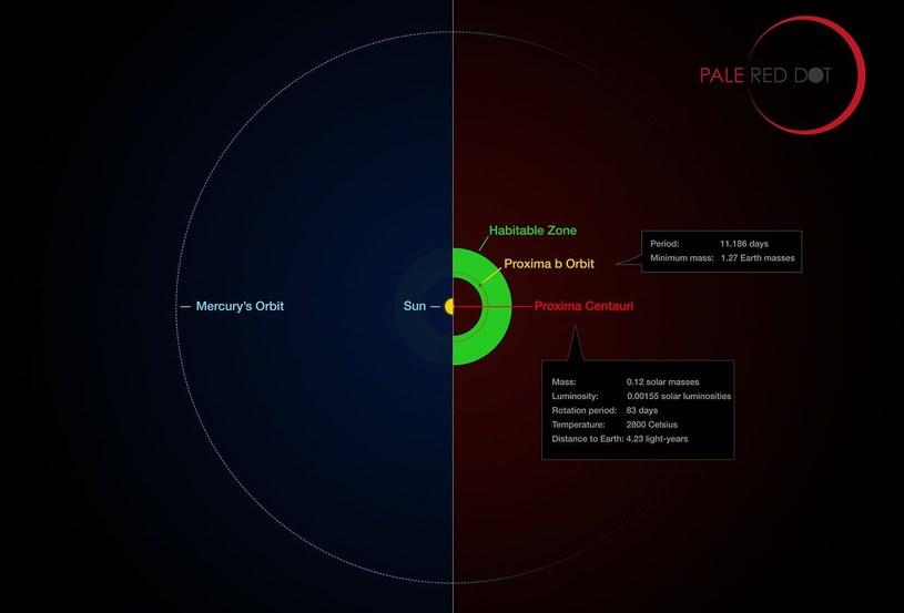 Porównanie orbity Proximy b z orbitą Merkurego /materiały prasowe