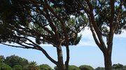 Portugalia 1 – miejsce na wakacje czyli hotel Quinta da Marinha