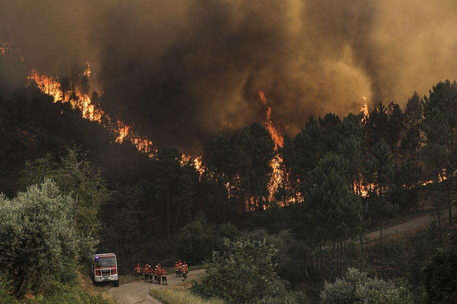 Portugalia: Ogłoszono stan alarmowy w związku z dużymi pożarami /PAULO CUNHA /PAP/EPA