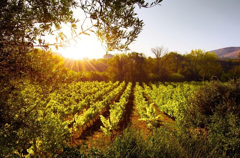 Portugalia słynie z doskonałych win /123RF/PICSEL