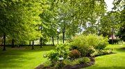 Porządki w ogrodzie: Na co musisz zwrócić uwagę