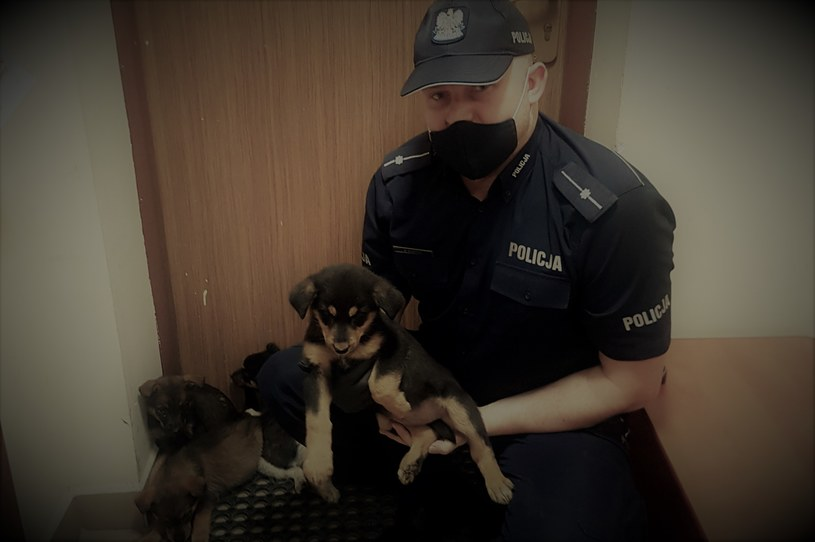 Porzucone szczenięta, Komenda Powiatowa Policji W Mławie /Policja