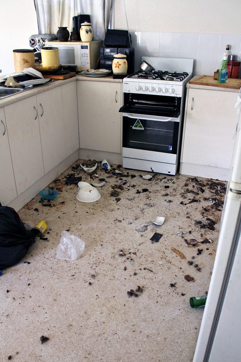 Porzucony dom, w którym z głodu zdechło 13 kotów /RSPCA SOUTH AUSTRALIA  /PAP/EPA