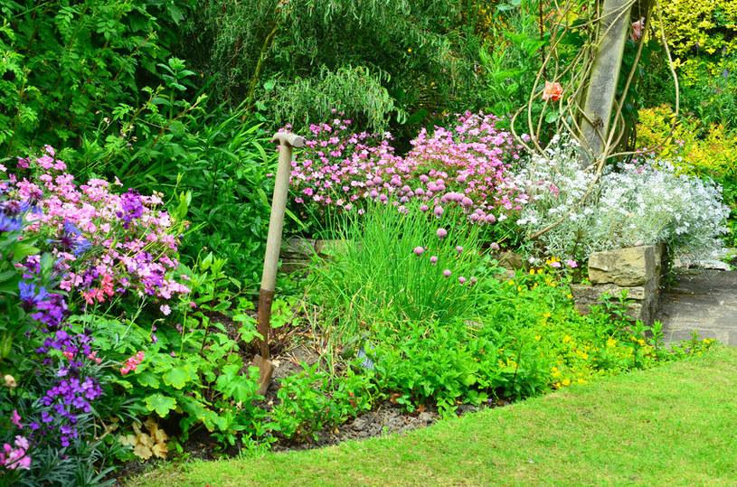 Posadź w ogrodzie dużo krzewów /©123RF/PICSEL