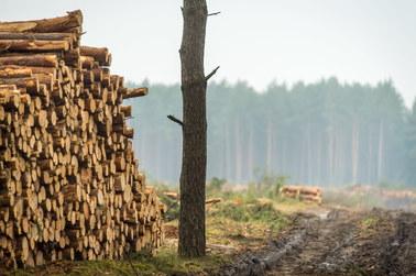 Poseł PiS: Chcemy jak najszybciej zmienić przepisy dot. wycinki drzew