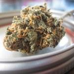 Posiadanie narkotyków na własny użytek bezkarne? Zgadnij, w którym kraju