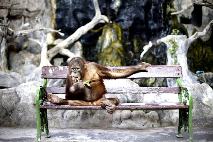 Posiedzę, poczekam /Diego Azubel/EPA /PAP/EPA