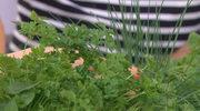 Postaw na świeże zioła