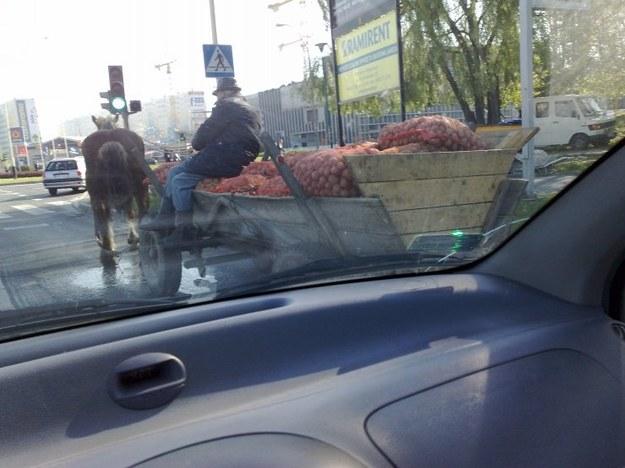Poszły konie...