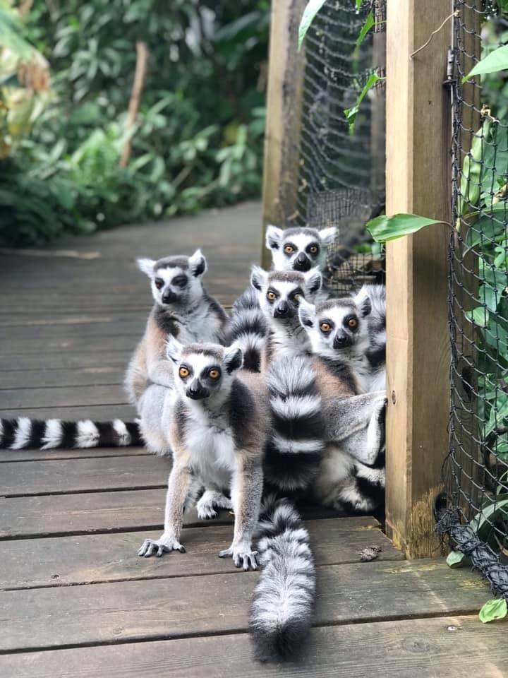 Poszukiwani Lichi, Adopho, Abeke, Akia i Ling Hee /foto. Den lille dyrehage/Facebook /