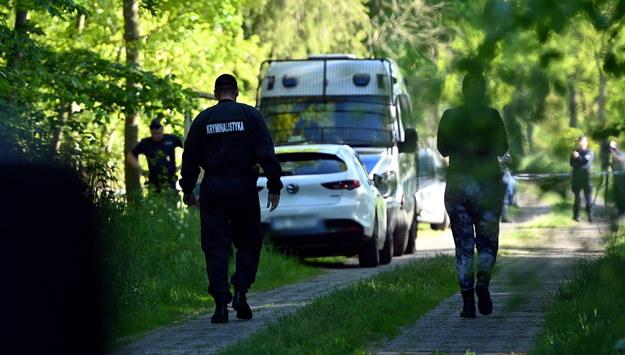 Poszukiwania w lesie obok Sulikowa / Marcin Bielecki    /PAP