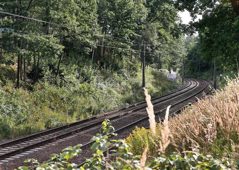 """Poszukiwania """"złotego pociągu"""" /Damian Klamka /East News"""