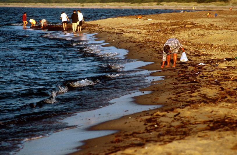 Poszukiwanie bursztynów na bałtyckiej plaży. /Marek Skorupski /Agencja FORUM