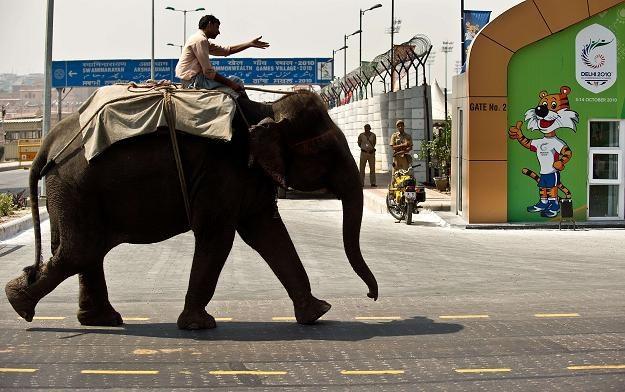 Potencjał Indii wciąż jest duży, ale nie ma szans ujawnić się bez poprawy globalnej koniunktury /AFP