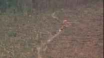 Potężny wiatr powalił setki hektarów lasów