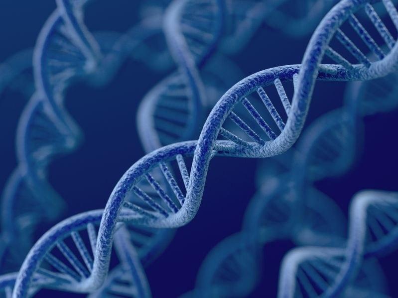 Potrzebujemy tylko nieco ponad 8 proc. naszego DNA. Co z resztą? /123RF/PICSEL