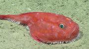 Potwory z Zatoki Meksykańskiej: Upiorne znaleziska w morskich odmętach