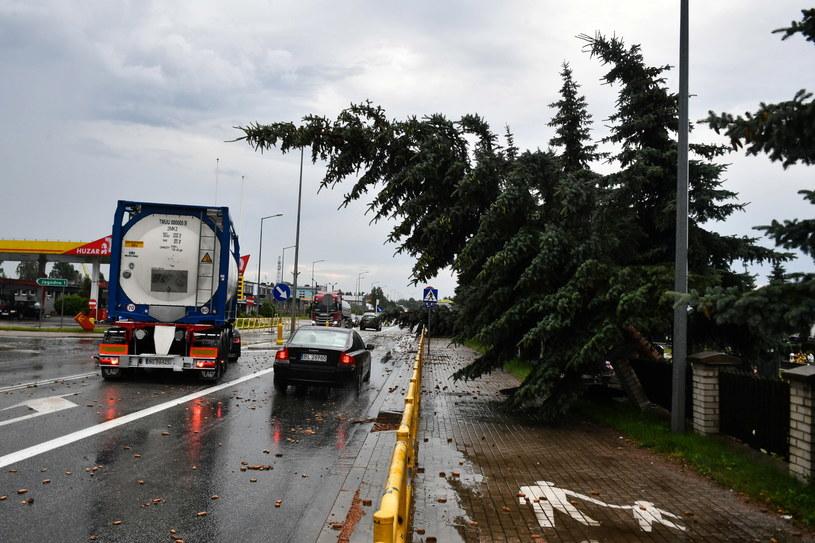 Powalone drzewa po nawałnicy w Piszu (woj. warmińsko-mazurskie) /Andrzej Lange /PAP