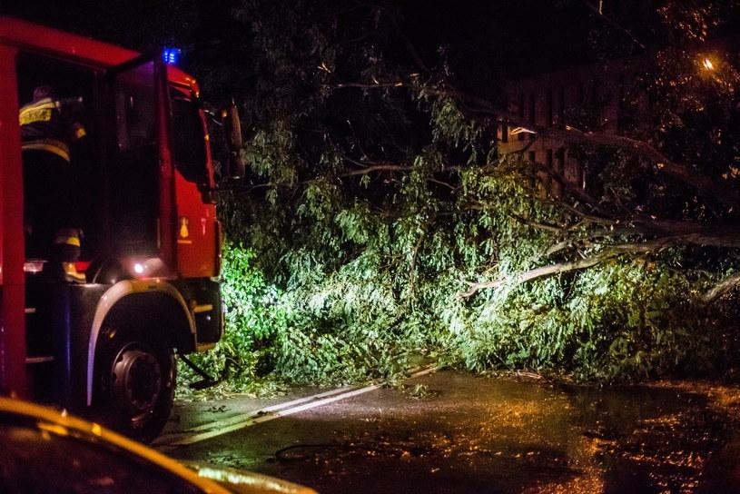 Powalone drzewa w Gnieźnie /Marek Lapis /Agencja FORUM