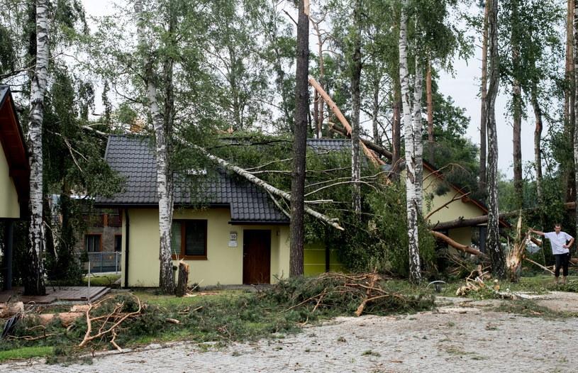 Powalone drzewa w okolicach Nędzy i Górek Śląskich po piątkowej burzy /Andrzej Grygiel /PAP