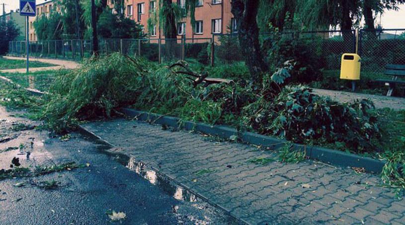 Powalone drzewa w okolicach Złotoryi /Bartłomiej Paulus /RMF24