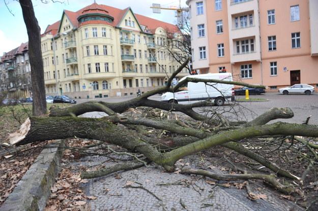 Powalone drzewa w Szczecinie /PAP/Marcin Bielecki /PAP