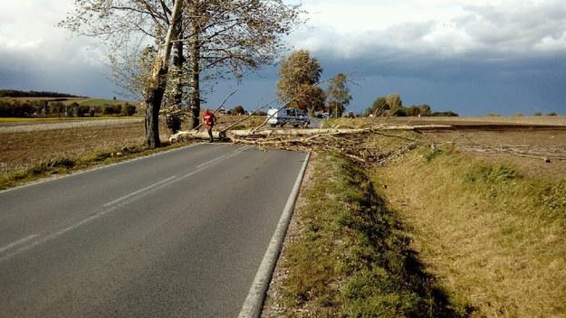 Powalone przez wichurę drzewo zatarasowało trasę przed małopolskimi Słomnikami /Joanna Zalewska /