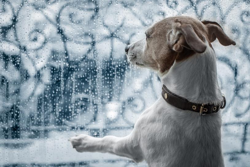 Powody, dla których psy boją się burzy mogą być różne /123RF/PICSEL