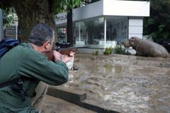 Powódź w Tbilisi. Z zoo uciekły zwierzęta