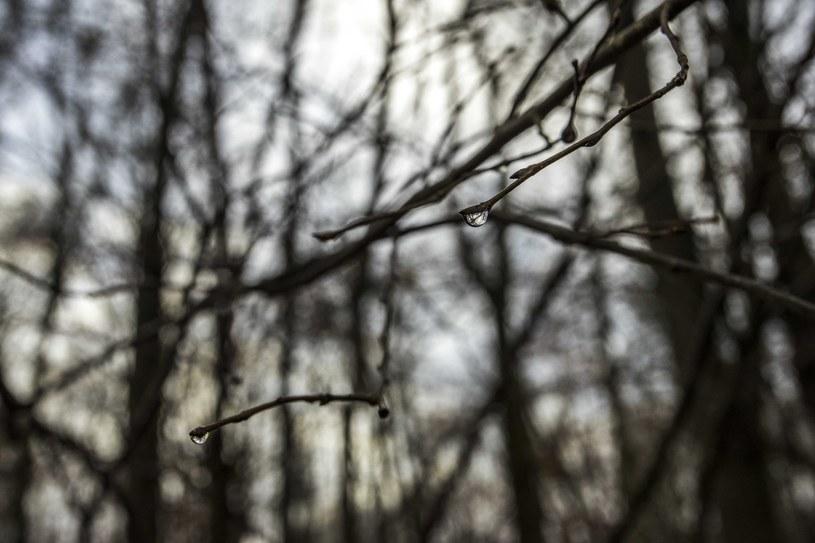 Powrót zimy? Temperatura będzie spadać /Dawid Tatarkiewicz /East News