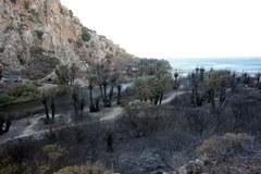 Pożar gaju palmowego na Krecie
