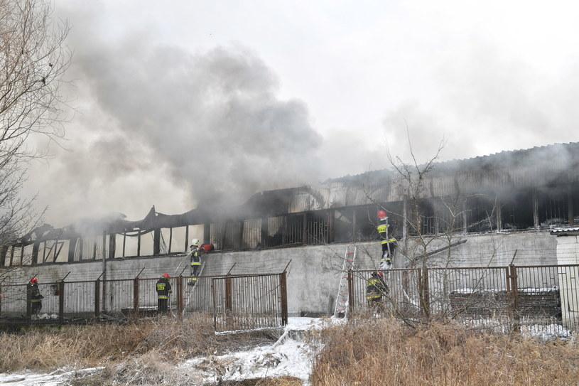 Pożar hali magazynowej przy ul. Popielskiego we Wrocławiu /Jan Karwowski /PAP