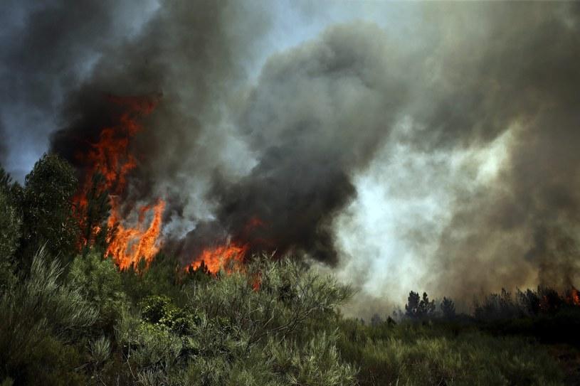 pożar lasów //ESTELA SILVA /PAP