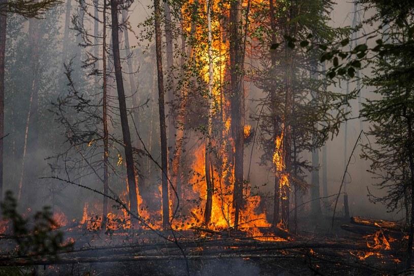 Pożar lasu na Syberii /DIMITAR DILKOFF /AFP