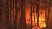Pożar lasu pod Berlinem. Trwa ewakuacja ludności