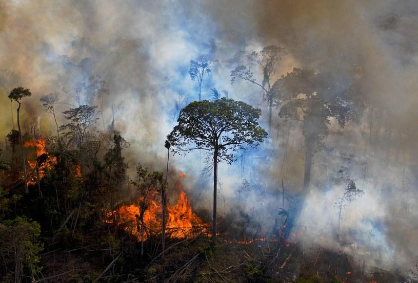 Pożar lasu w Amazonii /CARL DE SOUZA/AFP /AFP