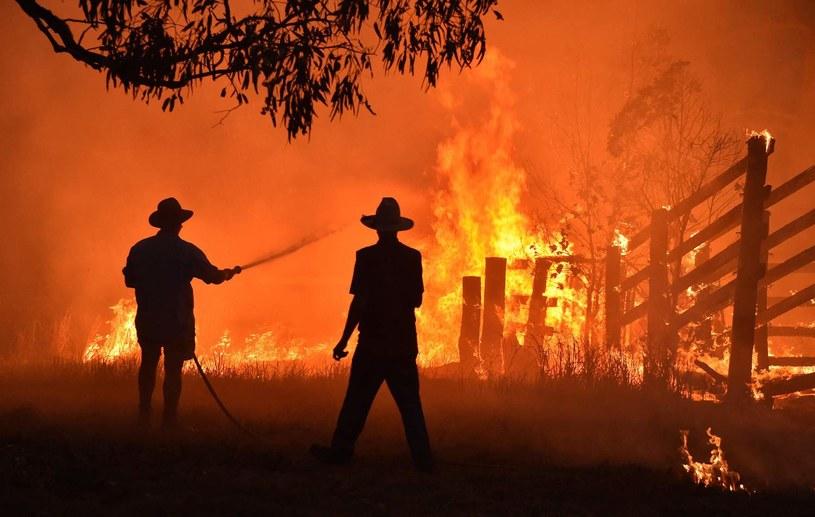 Pożar lasu w Australii, listopad 2019 r. /PETER PARKS /AFP
