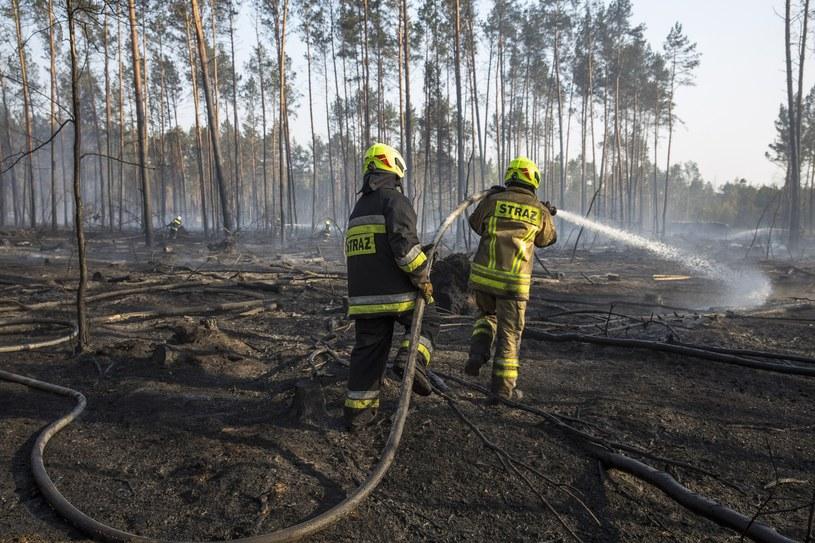 Pożar lasu, zdj. ilustracyjne /Marek Maliszewski  /Reporter