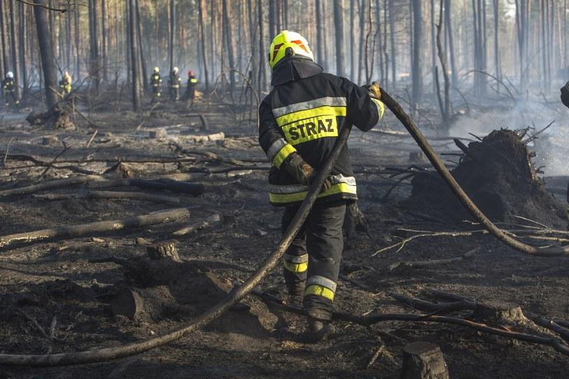 Pożar lasu; zdjęcie ilustracyjne /Marek Maliszewski  /Reporter