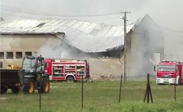 Pożar owczarni koło Kościana. W środku były zwierzęta